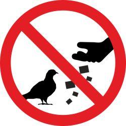 Lindude toitmine keelatud